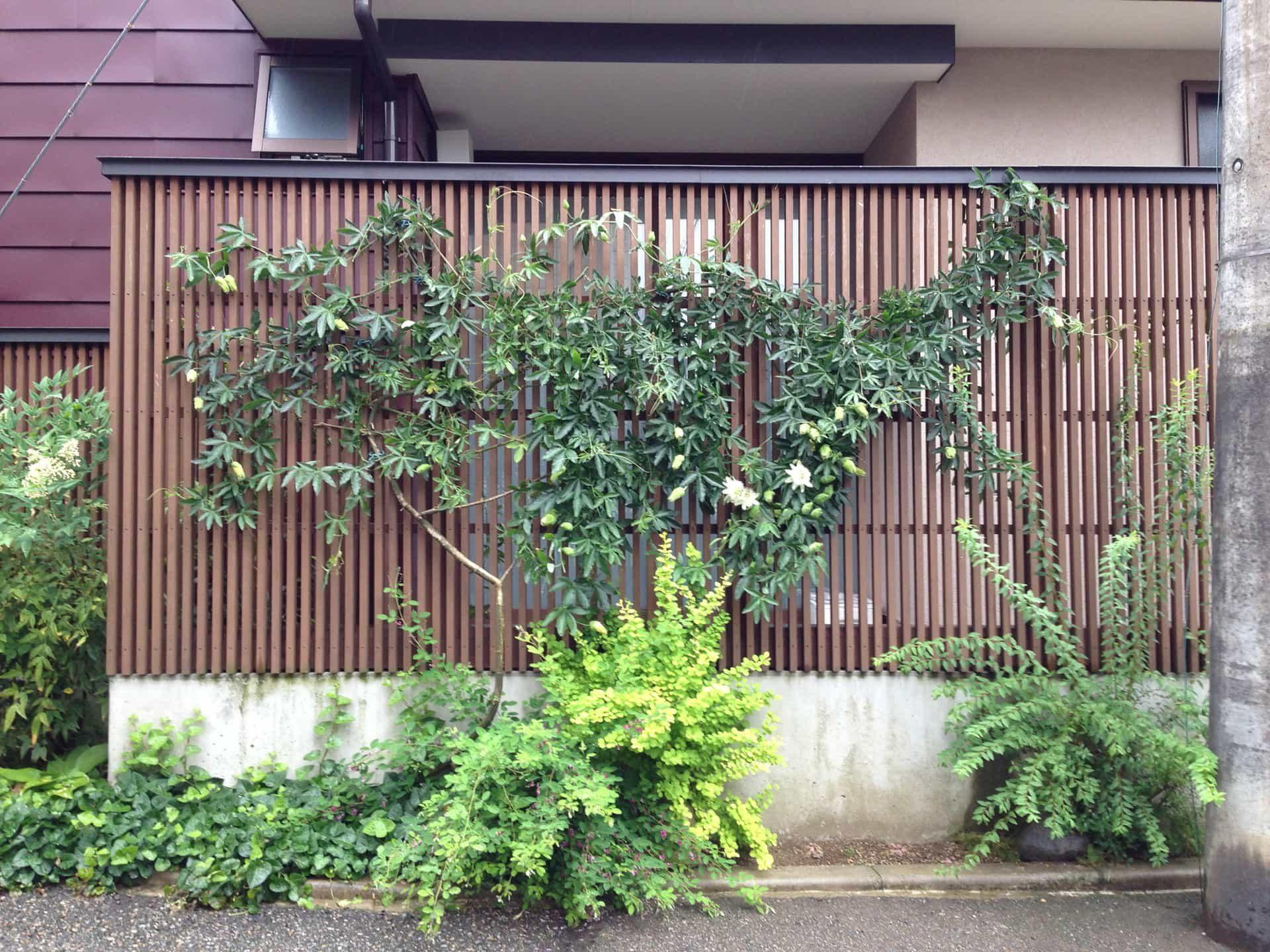 石引の家 格子塀